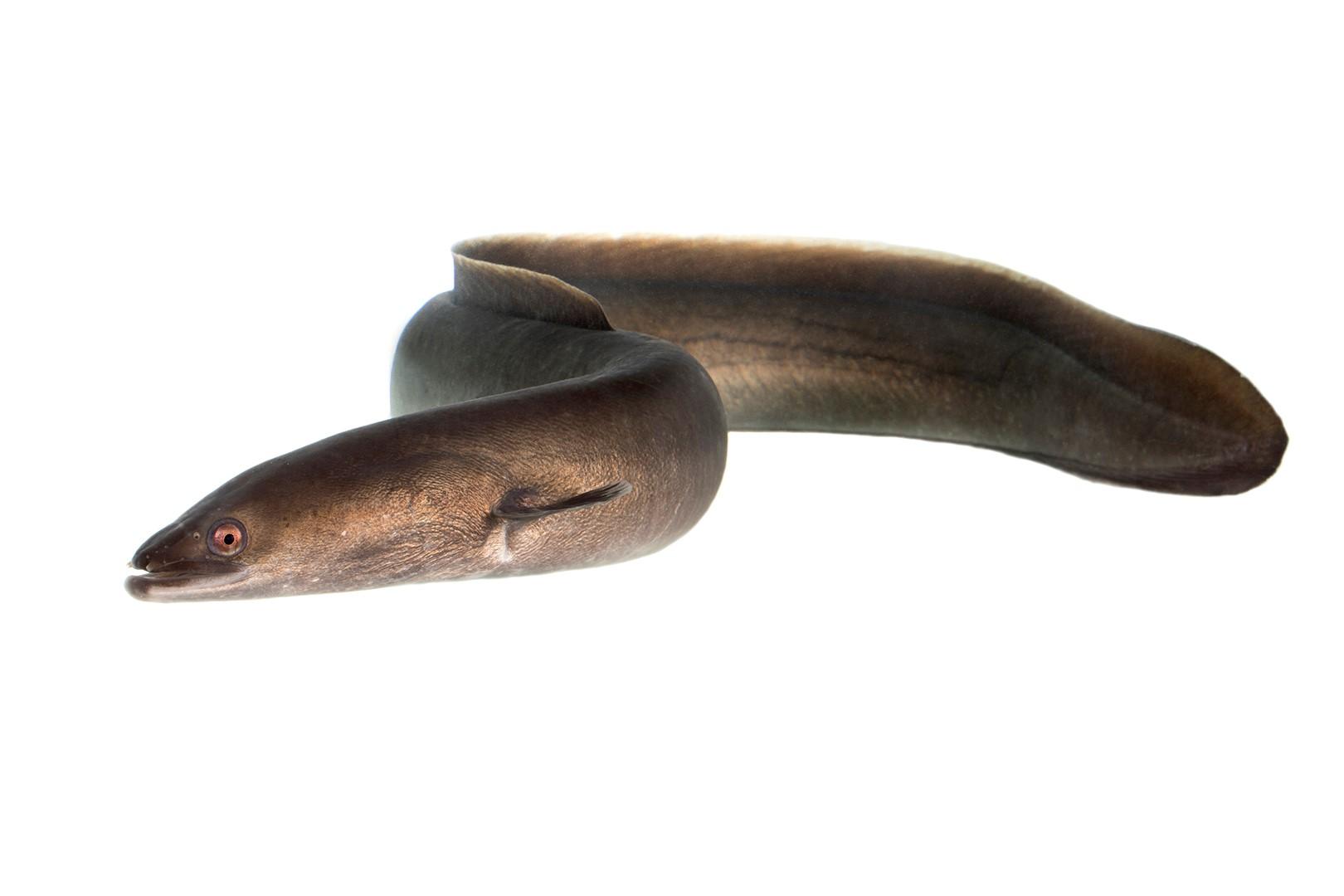 hitta sex i ål